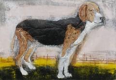 Seisova koira