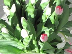 ihanat kukat