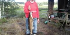 Tapani Hänninen 13.08.2019 kuha 4,2kg Pyydys: Pietarin kalaverkko 50mm