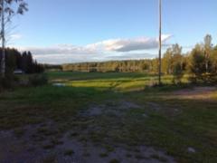 Tyyni Hirvijärvi