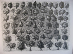 64 puuta, 64 st träd