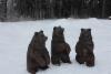 Pikkunallet heräsi 22.2 talviunesta Höytiällä