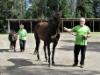 Aikuisten hevostaitokurssi