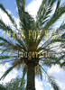 for sale big palm tree in majorca