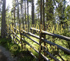 for sale traditional wood fense in forest