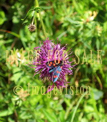 for sale butterfly in purple flower