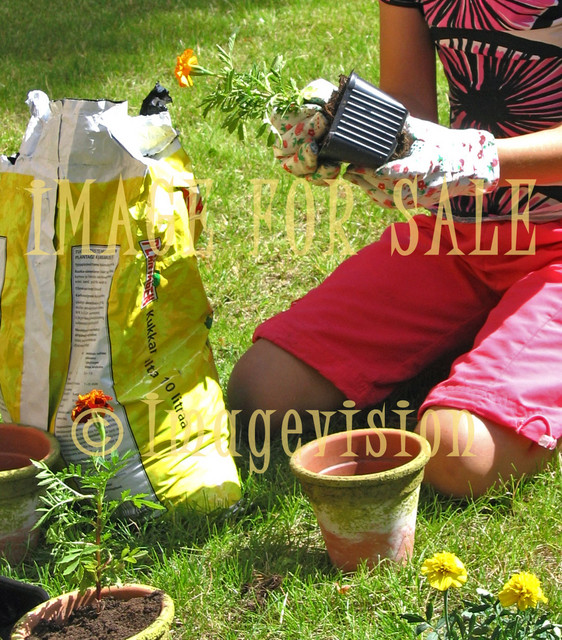 for sale hands of small girl planting flowers