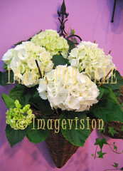 for sale basket with white flowers on purple wall