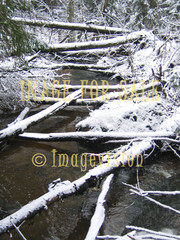 for sale river with fallen trees and snow