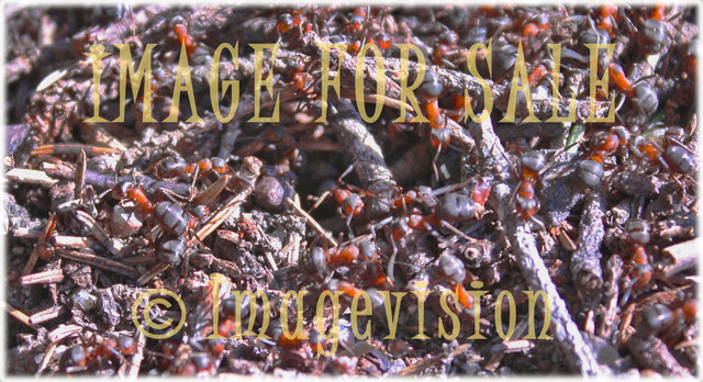 for sale busy ants life