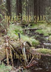 for sale rusty bike in nature park