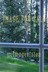 for sale forest view from inside