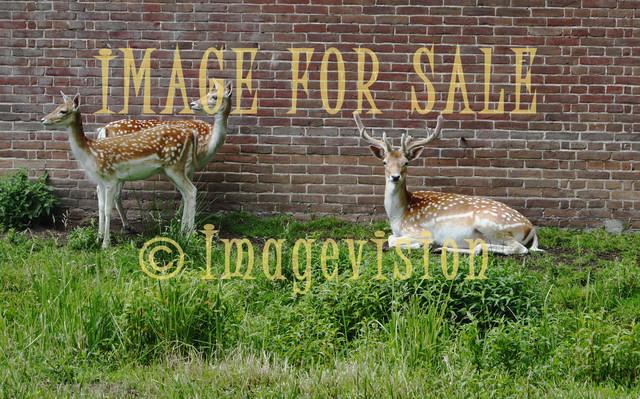 for sale three deers resting