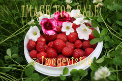 for sale strawberries and flowers