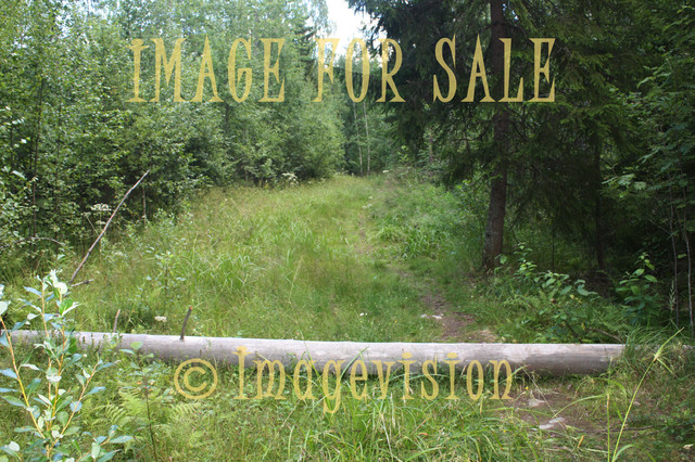 for sale chaparral and forest road