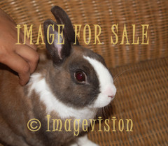 for sale cute little rabbit