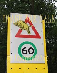 for sale funny wild boar warning
