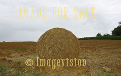 for sale round golden haystack