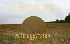 for sale round golden haystack