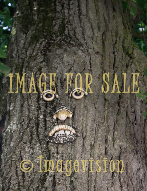 for sale face made on tree