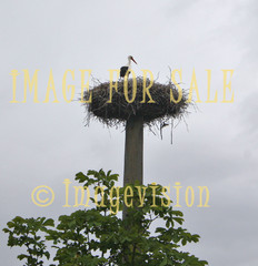 for sale stork and the nest