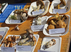 for sale finnish boletus types