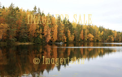 for sale autumn forest reflections on water