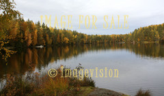 for sale autumn lake and forest view