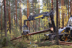 for sale forest harvester at work