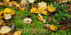 for sale autumn leaves on ground