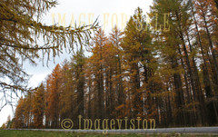 for sale largest larch forest of finland