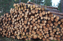 for sale wood waiting for transport
