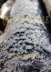 for sale glittering frost sticks on tree trunk
