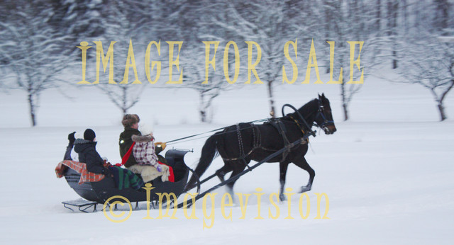 for sale horse sleigh ride in thick snow
