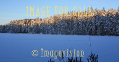 for sale white tree tops and frozen lake landscape