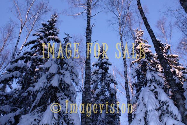 for sale winter sun rays reflecting in tree tops