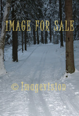 for sale ski track in spruce forest