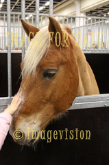 for sale horse showing curiosity