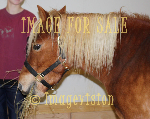 for sale brown horse having lunch