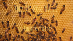 for sale honey producers in action