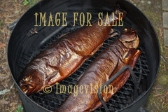 for sale golden smoked salmon