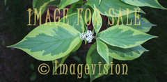 for sale figures of green leaves and white flower