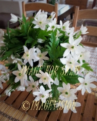 for sale white flower bouquet