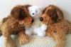 for sale teddy bears
