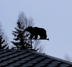 Iso Karhu katolla