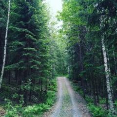 Metsätie perille