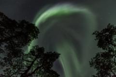 polarnightmagicmannyt_web