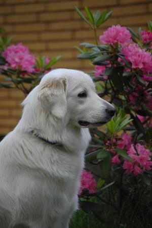 hopsula14062010_016.jpg