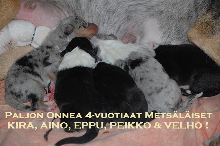 metsat4v.jpg