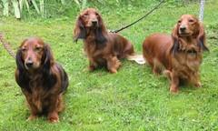 20100904 Reetta, Jade ja Siiri (c) Tarja Kesä